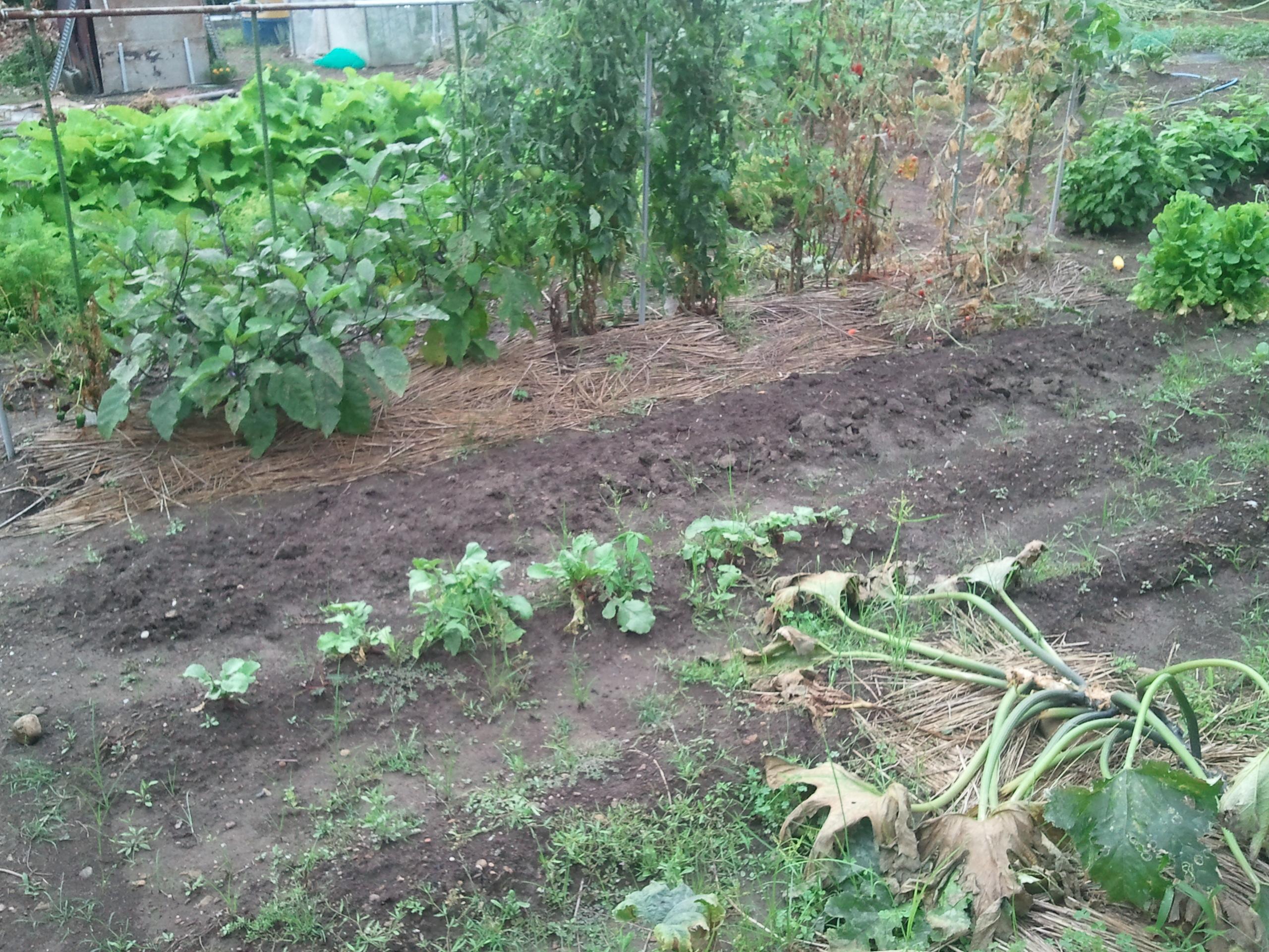 農業 今日の収穫
